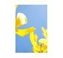 Touching Yellow Tulips Art Print
