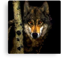 Wolf from Kaibab Forest in Arizona Canvas Print