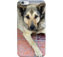 Brown and Black Dog iPhone Case/Skin