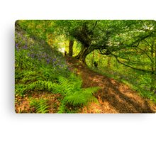 Bluebell Woodland (HDR) Canvas Print
