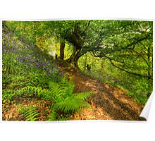 Bluebell Woodland (HDR) Poster
