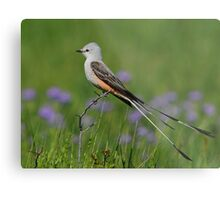 Scissor-tailed Flycatcher Metal Print