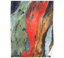 Colours of Bark Poster