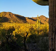 Saguaro Sunset by BGSPhoto