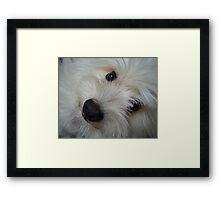 Emotional Support Dog(Landscape) Framed Print