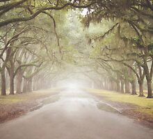 Live Oak Southern Canopy Tree Lined Driveway Green Brown by Sweet T Photography