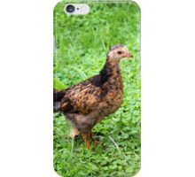 Young Chicken in a Field iPhone Case/Skin
