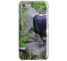 Female Andean Condor Next to Water iPhone Case/Skin