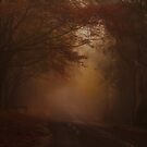 Misty Morn - Mount Wilson NSW - The HDR Experience by Philip Johnson