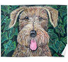 """Pet Dog """"81"""" Poster"""