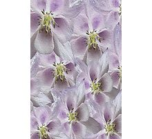 Flower Floral oil painting Photographic Print