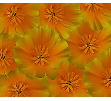 Poppy Flower Floral oil painting Photographic Print
