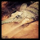 Gonna get you by Rebecca Hessey