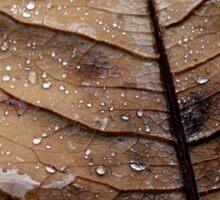 Leaf and Dew. Sticker