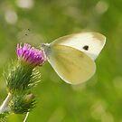 white butterfly by davvi