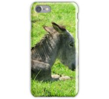Front of a Donkey Laying Down iPhone Case/Skin