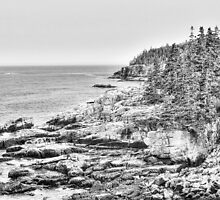 Acadia National Park in Black and White by Kadwell