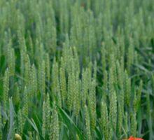 Poppies in Wheat Field Sticker