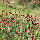 In Red Clover by Eileen McVey