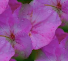 Raindrops On Petals by Artisimo