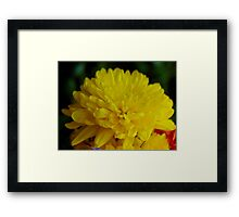 Yellow So Mello Framed Print