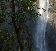 Tree at Wallaman Falls by Tim Burgess