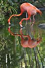 Flamingoes, As Is by Kim McClain Gregal