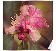 Rhapsody Blooms Poster
