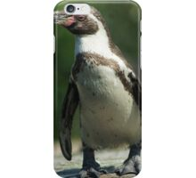 Posing Penguin iPhone Case/Skin
