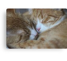 Brothers Touch Noises Canvas Print