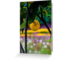Lemon Tree 'The Lost Gardens of Heligan' Greeting Card