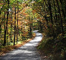 A Road Less Traveled  by David Dehner