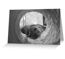 Cat in Tunnel Greeting Card