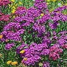 Joy Of Spring by Mike Pesseackey (crimsontideguy)