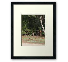 Mail Framed Print