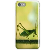 cricket in green  iPhone Case/Skin