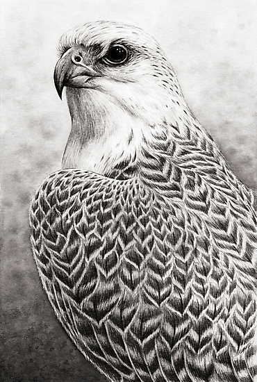 The Gyrfalcon by Mariya Olshevska
