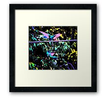 Hummingbird Battle Painting Framed Print