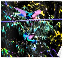 Hummingbird Battle Painting Poster