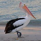 Pelican by looneyatoms
