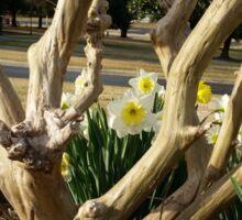 Twisted Daffodils Sticker