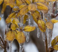 Ice Storm 2013 - My Garden in the Morning  Sticker