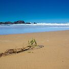 Sawtell Beach by Clare Colins
