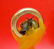 One Snail To Rule Them All by oliverthesnail