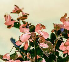 Cottage Flowers by Heather Matthews