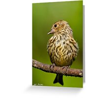 Pine Siskin With Yellow Coloration Greeting Card