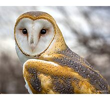 The Utterly Fascinating Barn Owl Photographic Print