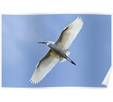 Flight Feathers Poster