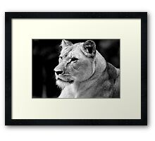Big Cat No.2 Framed Print