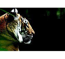 Big Cat No.5 Photographic Print